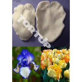 Вайнер Попугайный тюльпан и ирис