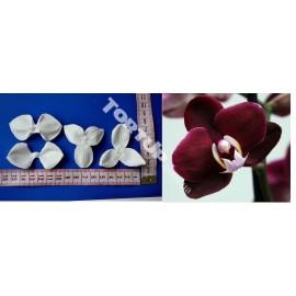Вайнер Орхидея Фаленопсис, набор М